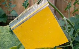 Как бороться с белокрылкой на комнатных растениях