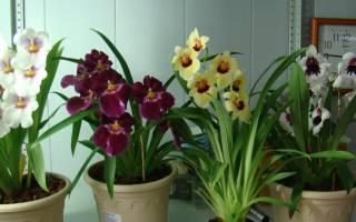 Когда можно пересадить орхидею в домашних условиях