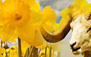 Цветы по гороскопу овен