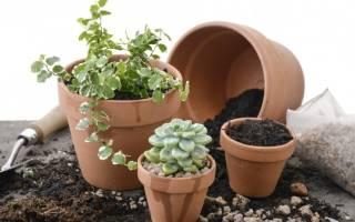 Универсальный грунт для комнатных растений