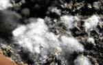 Почему плесневеет земля в цветочных горшках