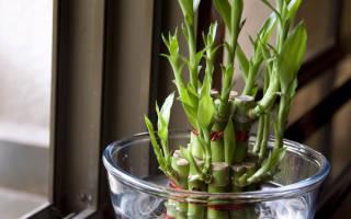 Как закрутить бамбук в домашних условиях