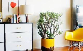 Комнатные растения неприхотливые в уходе
