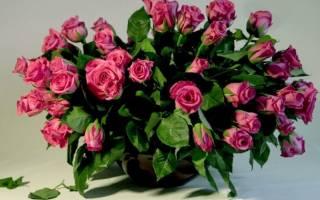 Посадить розу из букета