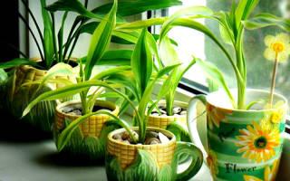 Комнатные растения растущие в тени