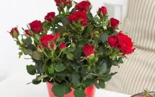 Грунт для розы комнатной
