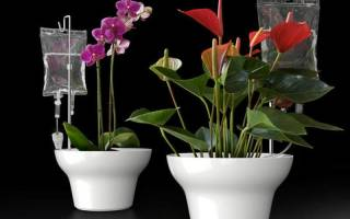 Поливалка для цветов