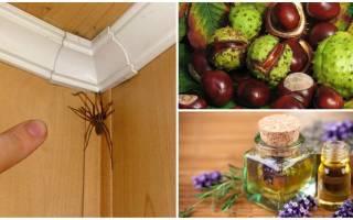 Как избавиться от паутины