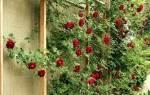 Опоры для роз своими руками