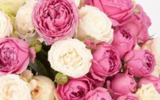Пионовидные розы бордовые