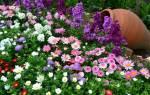 Летние садовые цветы