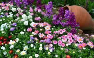 Уличные цветы многолетние