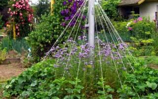 Как поливать цветы дрожжевым раствором