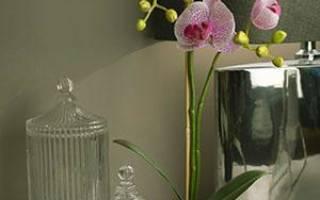 Какой горшок выбрать для орхидеи