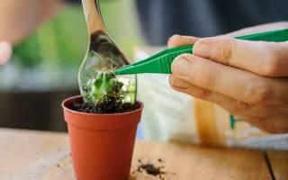 Почва для кактуса комнатного