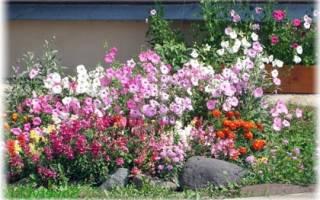Садовые цветы каталог с фотографиями