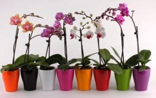 Как прорастить семена орхидеи