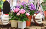 Ядовитые комнатные растения для человека