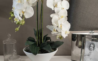 Сколько лет живет орхидея