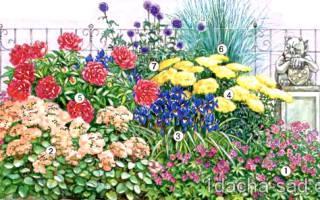 Цветник с пионами