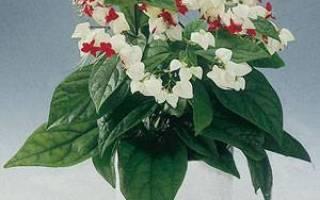 Маленькие белые цветочки название