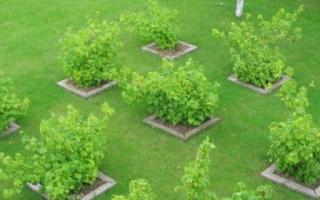 Как правильно посадить сад